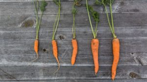 Carrots help reduce the risk of breast cancer